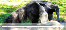 Anteater_Aspirator_Pipette_228x105_p