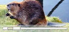 Beaver_Paddle_Pipette_228x105_p