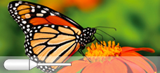 Butterfly_Micro_Pipette_228x105_p