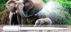 Elephants_Non-graduated_Pipette_228x105_p
