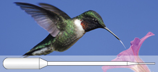 Hummingbird_Fine-tip_Pipette_228x105_p